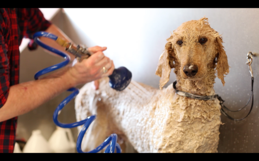 jake's grooming parlour promotional video
